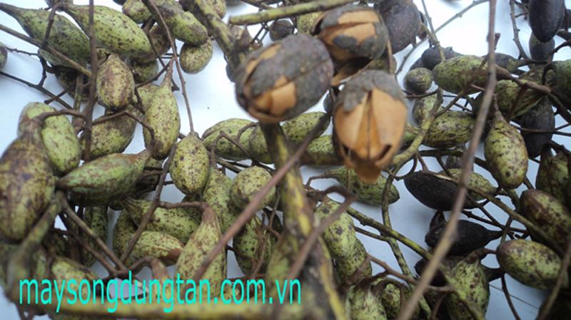 http://maysongdungtan.com.vn/Editor/assets/DSC02697.JPG
